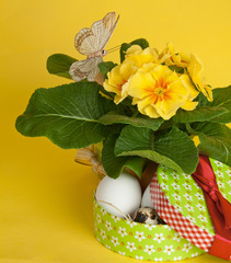 Quail eggs in a decorative box and spring flower