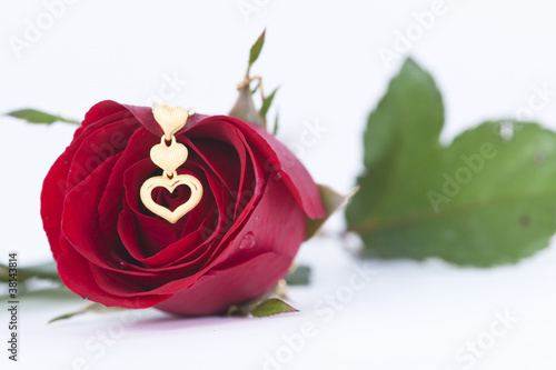 Gold heart pendant and red rose on white background