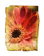 aged flower print