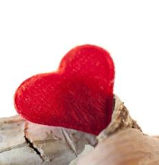 coeur sur bois de bouleau