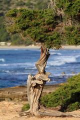 Green pine tree over blue sea.