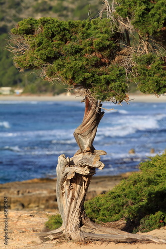 Green pine tree over blue sea.