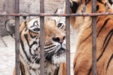 captivity animal poster