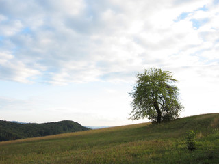 Lonely Tree in Early Autumn