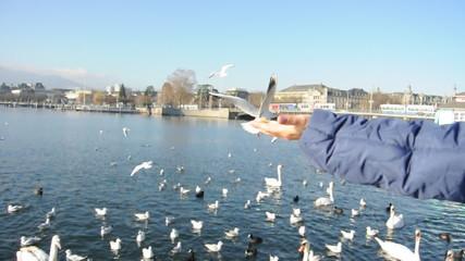 Vögel am Zürichsee