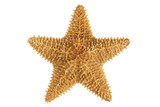 Dried yellow-orange starfish