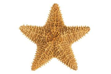 Dried yellow-orange starfish