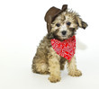 Coyboy Puppy