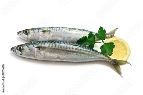 two mackerel with lemon - due sgombri