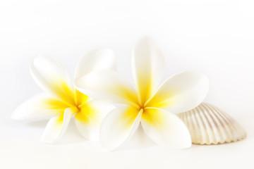 Frangipani and Seashell