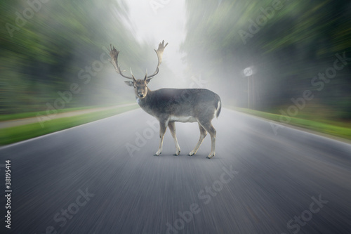 Foto op Aluminium Hert Wildlife Accident