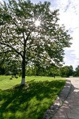 The Greenest park