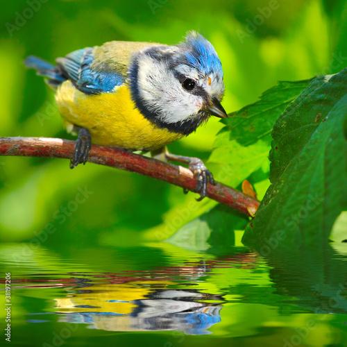 Fototapeten,vögel,wildlife,tier,birdie