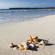 shells square