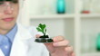 Female scientist analyzing plant in petri dish