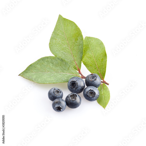 Fresh forest blueberries with leaves