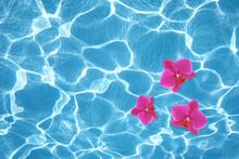 Trois orchidées roses flottant sur l'eau dans la piscine