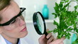 Biochemist looking at green plant through magnifying glass
