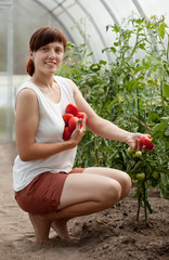 woman with  harvested tomato