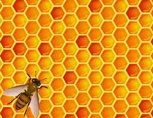Bee with honey comb