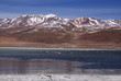 Lake with flamingo in andes landscape, Altiplano, Boliwia