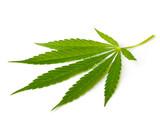 Fototapety Cannabis leaf