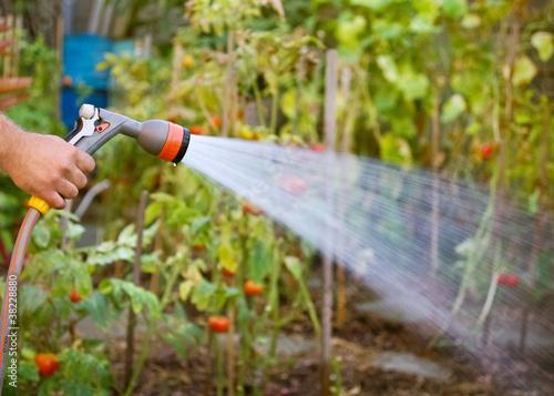 Watering garden equipment - 38228880