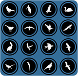 blue  signs. silhouettes of birds. birrds icons