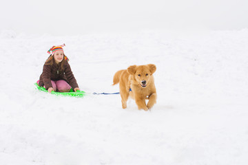 dog pulling kid on a snow sled