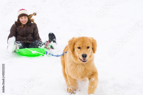 Golden Retriever Dog pulling a child on a sled in the snow
