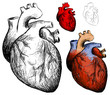 Vector realistic hearts collection on a white background