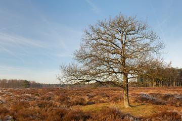 Heather landscape in winter