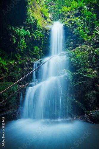 Beautiful Lush Waterfall in Hawaii - 38239416