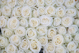 group of white roses after a rainshower - Fine Art prints