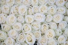 Gruppe von weißen Rosen nach einer Regendusche