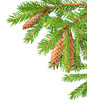 Fir branches isolated on white