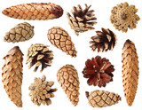 Fir and pine cones isolated on white