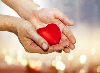 artificial red heart on hands