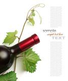 bottle of wine - 38247073