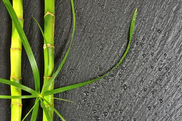 Bambus Zitronengras