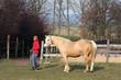 Pferd mit Trainerin 9
