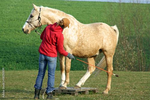 Pferd mit Trainerin
