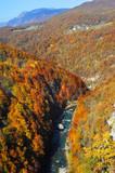 Tara River Gorge poster