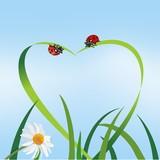 Liebe   Natur   Grass   Marienkäfer  