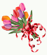 Tulip bouquet. Vector