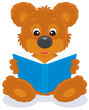 brown bear cub reading a blue book