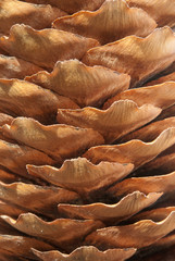 pine cone, the texture