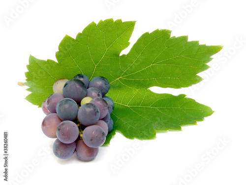 Fresh grape cluster with green leaves isolated