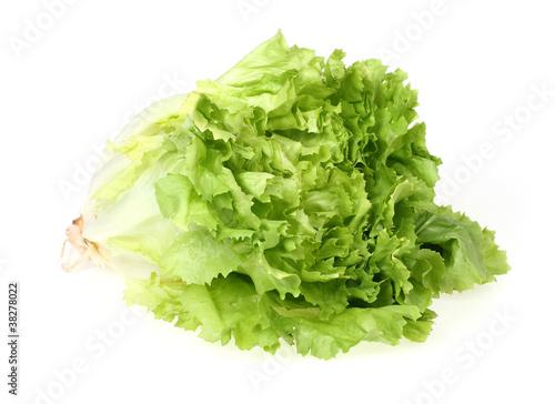 Endivien Salat freigestellt