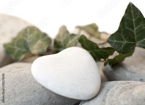 Sur Lierre Coeur Nature Blanc Sur Lierre